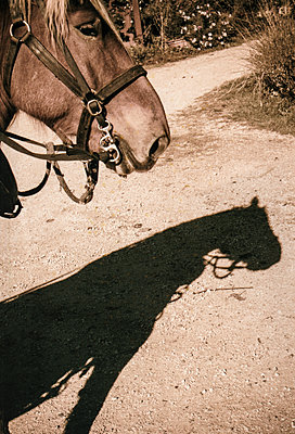 Ramses shadow - p1402m2258901 by Jerome Paressant