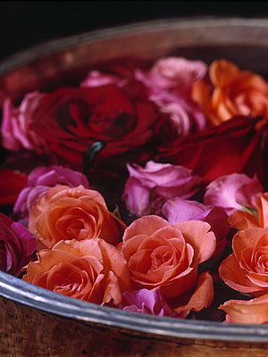 Roses floating in bowl - p349m2167673 by Polly Wreford