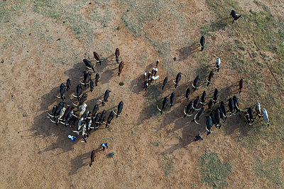 Aerial of cattle moving to a waterhole, Gerewol festival, courtship ritual competition among the Wodaabe Fula people, Niger, West Africa, Africa - p871m2178296 by Michael Runkel