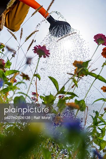 Watering flowers - p427m2026138 by Ralf Mohr