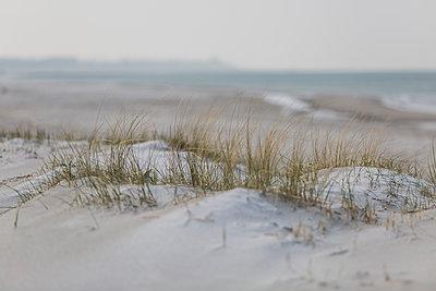 Germany, Mecklenburg-Western Pomerania, Darss, Baltic Sea, West beach, dune - p300m2079167 by Anke Scheibe