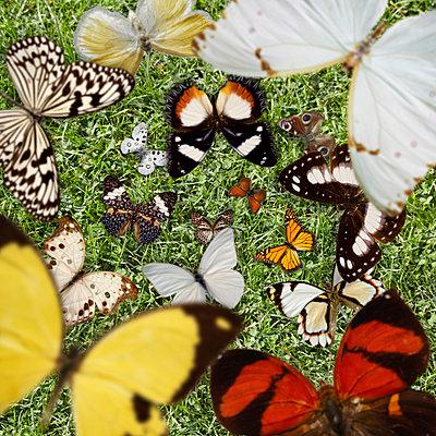 Schmetterlinge - p415m2168329 von Tanja Luther