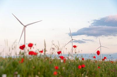 Abendstimmung mit Klatschmohn und Windkraftanlagen - p1079m1184959 von Ulrich Mertens