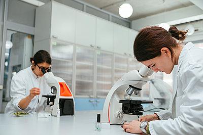 Laboratory technicians using microscopes in lab - p300m1416490 by Zeljko Dangubic