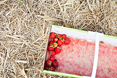 Fresh strawberries in a basket - p699m2007804 by Sonja Speck