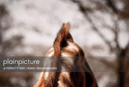 Giraffe - p1020m777424 by Aaron Alexandersson