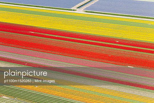 p1100m1520283 von Mint Images