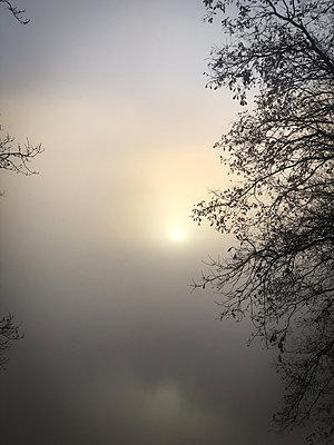 Deutschland, Bäume im Nebel - p341m2232204 von Mikesch