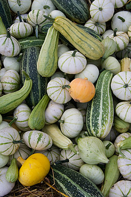 Vegetables - p972m1333419 by Gerry Johansson