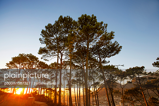Africa, South Africa, Cape Town, Trees on a hilltop with sunset - p300m1587327 von zerocreatives