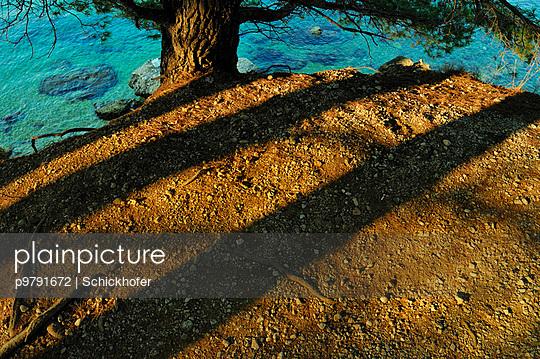 Waldboden am Meer - p9791672 von Schickhofer