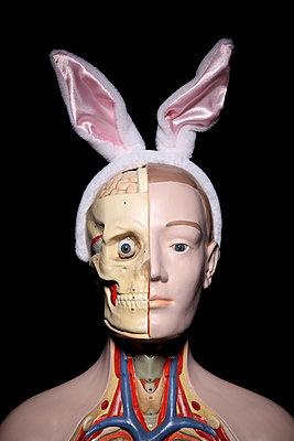 Anatomie des Hasens - p237m886628 von Thordis Rüggeberg