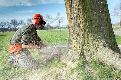 Lumberjack felling tree - p300m1081532f by Anna Müller