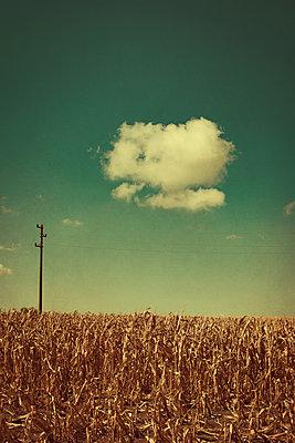 Corn field - p1432m2258595 by Svetlana Bekyarova