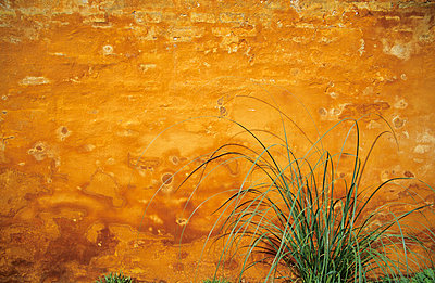 Rotten yellow wall - p1800490 by Martin Llado