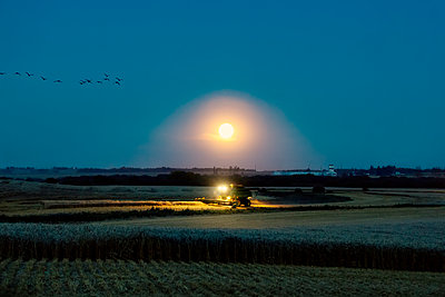 Combine harvesting a canola crop at dusk; Alberta, Canada - p442m2008853 by LJM Photo