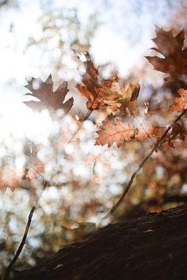 L'automne arrive 08 - p987m2223915 by Célia Swaenepoel