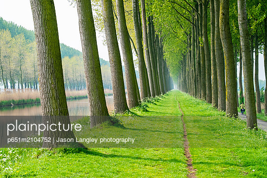 Rows of trees along a canal in spring, Damme, West Flanders, Belgium - p651m2104752 by Jason Langley photography
