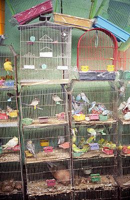 Überfüllte Vogelkäfige - p1120861 von AMI