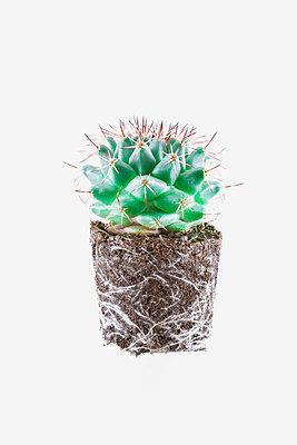 Kaktus mit Wurzel - p1149m2092430 von Yvonne Röder