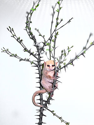 Animal on branch - p1012m1563756 by Frank Krems