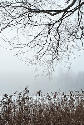 Mist by the lake - p971m1208313 by Reilika Landen