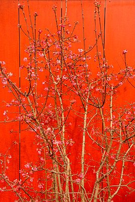 branches and wooden wall - p876m1452515 by ganguin