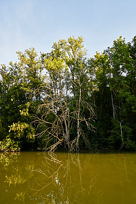 Trees on the riverside in summer - p1312m2263119 by Axel Killian