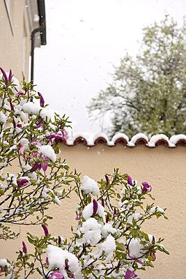 Schnee im April - p533m1474835 von Böhm Monika