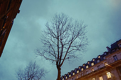 France, Tree in Paris - p1189m2175200 by Adnan Arnaout