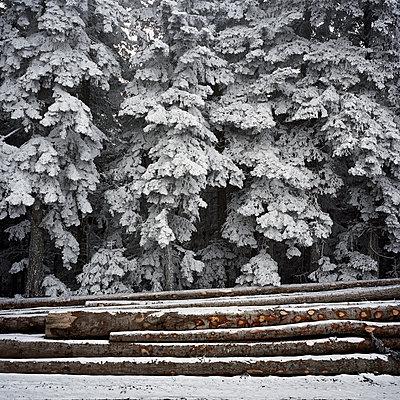 Schneebedeckt - p1287m1115977 von Christophe Darbelet
