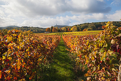 Germany, Rhineland-Palatinate, Weisenheim am Berg, vineyards in autumn colours, German Wine Route - p300m2042090 von Gaby Wojciech