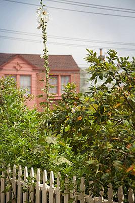 Garten in San Francisco - p948m940266 von Sibylle Pietrek