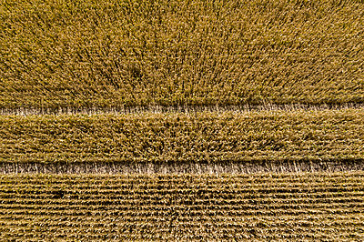 Aerial view, Cornfield - p958m2196374 by KL23