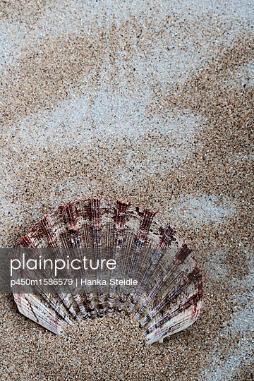 Seashell in the sand - p450m1586579 by Hanka Steidle