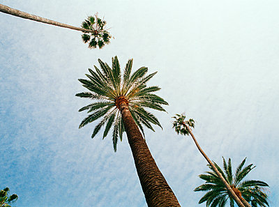 Palm trees and blue sky Los Angeles USA - p312m1076824f by Susanne Walstrom