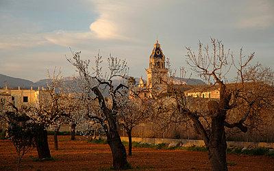 Mallorca - p5600016 by Dave Keightley