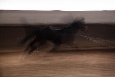 Schwarzes Pferd - p739m749018 von Baertels