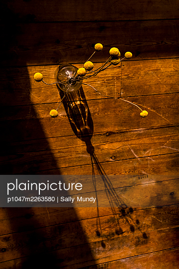 Dried craspedia in a glass vase from above casting shadows on wooden floor  - p1047m2263580 by Sally Mundy