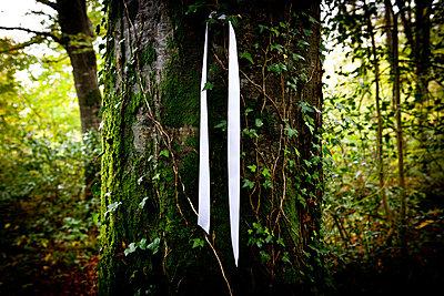 White Ribbon On Tree - p1082m940462 by Daniel Allan