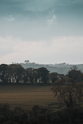 Field and trees in the fog, Northern Ireland - p1681m2283613 by Juan Alfonso Solis