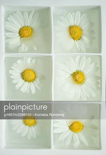 Meadow flowers in hibernation - p1657m2288103 by Kornelia Rumberg