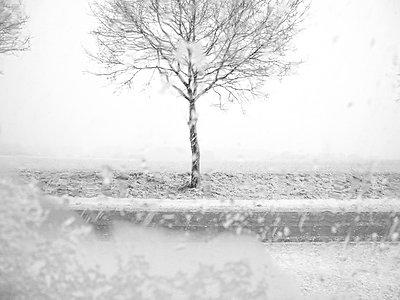 Snowfall - p1523m2064356 by Nic Fey