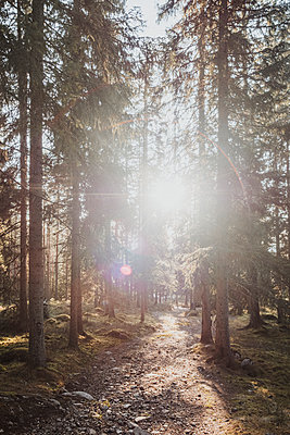 Sun shining through trees in forest - p312m2208240 by Rania Rönntoft