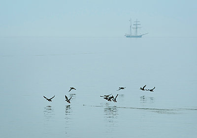 birds flying over the sea - p1132m1083585 by Mischa Keijser