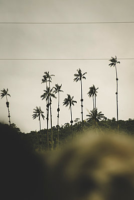 Palmtree on the road - p1150m1423901 by Elise Ortiou Campion