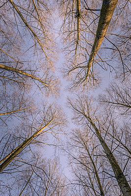 Vertigo poplars - p1402m2063452 by Jerome Paressant