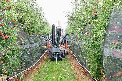 Apple harvesting on a plantation, harvester for automation - p300m2144330 by lyzs