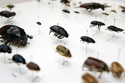 Bugs - p3270214 by René Reichelt