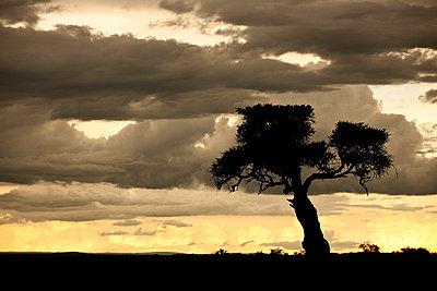 Masai Mara Nationalpark Kenia - p5330309 von Böhm Monika